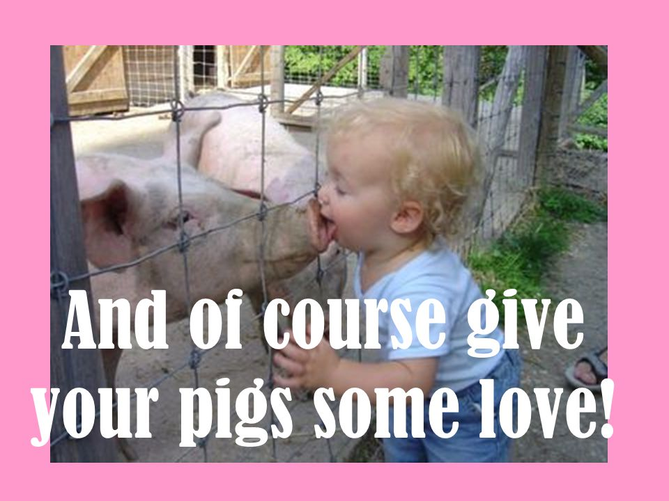 And of course give your pigs some love!