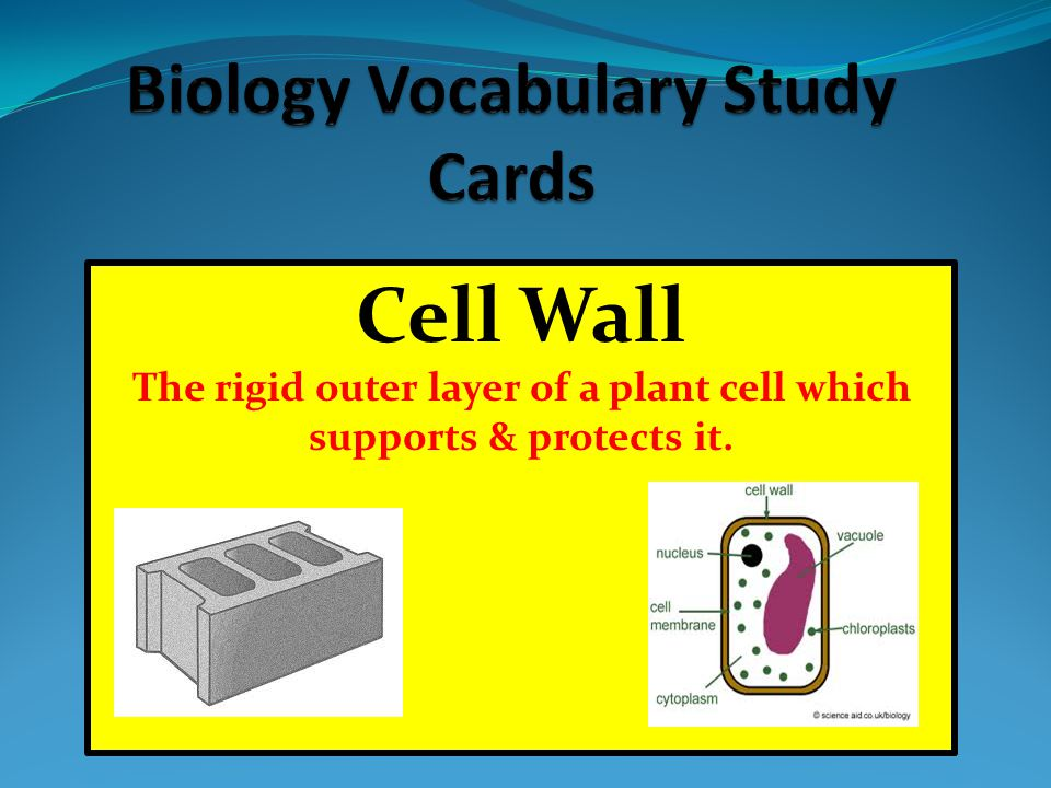 The rigid outer layer of a plant cell which supports & protects it.