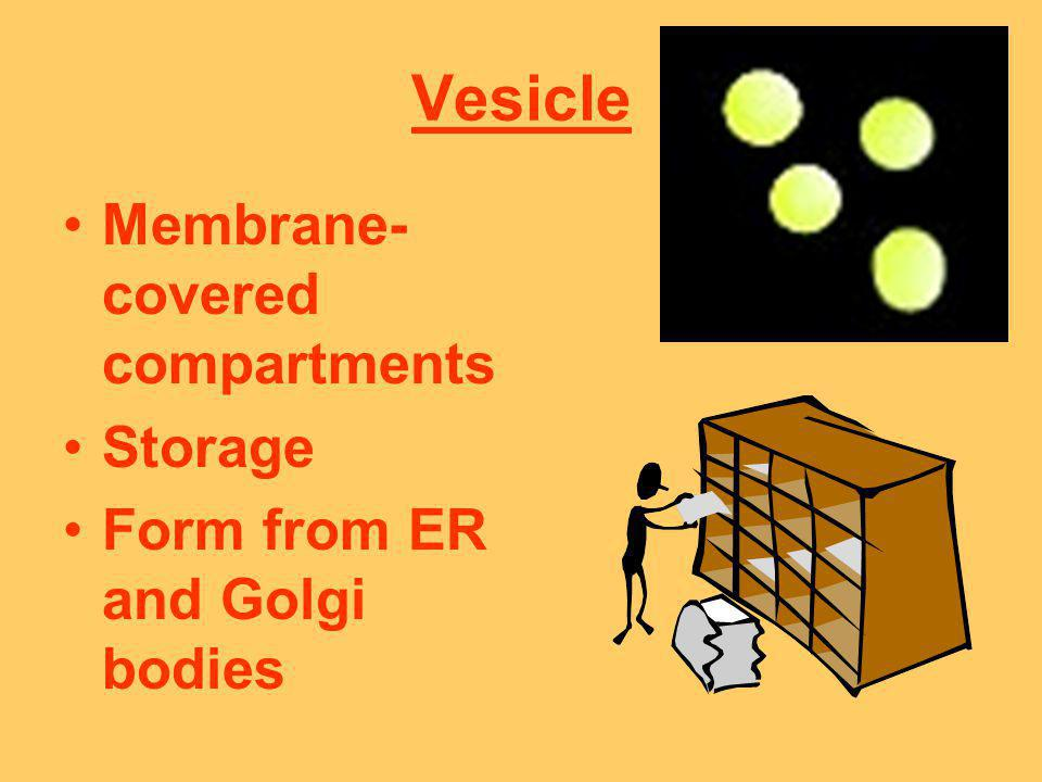 Vesicle Membrane- covered compartments Storage Form from ER and Golgi bodies