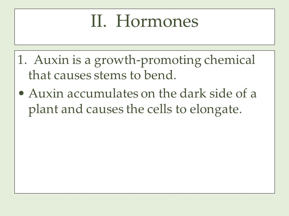 II. Hormones 1. Auxin is a growth-promoting chemical that causes stems to bend.