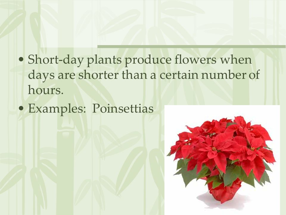 Short-day plants produce flowers when days are shorter than a certain number of hours.