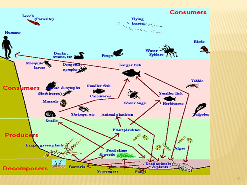 Cycles are recycled through the biospere by food webs, the hydrosphere, the biosphere, the geosphere, atmosphere Energy flows through food webs, is ma