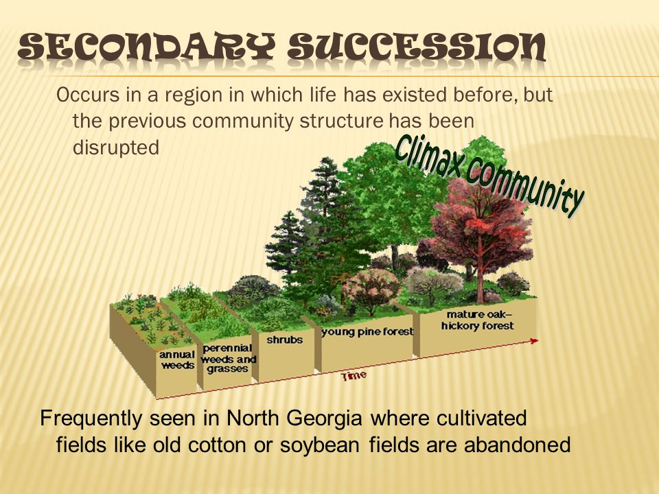 Succession beginning in an area or surface on which there has never been life before Exposed rock Lichen & mosses Grasses, herbs, scrubs, larger scrubs, tree seedlings Aspen, jack Spruce, pines White spruce, Balsam fur, Paper birch TIME