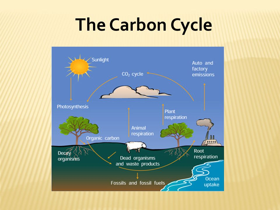 The continuous movement of carbon and oxygen from non-living into living organisms CO2 in atmosphere build organic molecules Plants use CO2 to produce