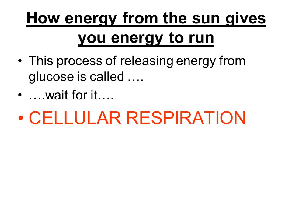 How energy from the sun gives you energy to run This process of releasing energy from glucose is called ….