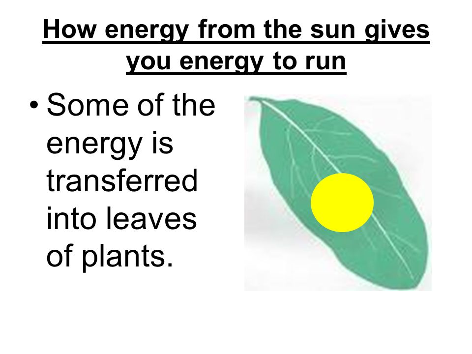 How energy from the sun gives you energy to run So they send the glucose to the cells mitochondria – the powerhouse of the cell.