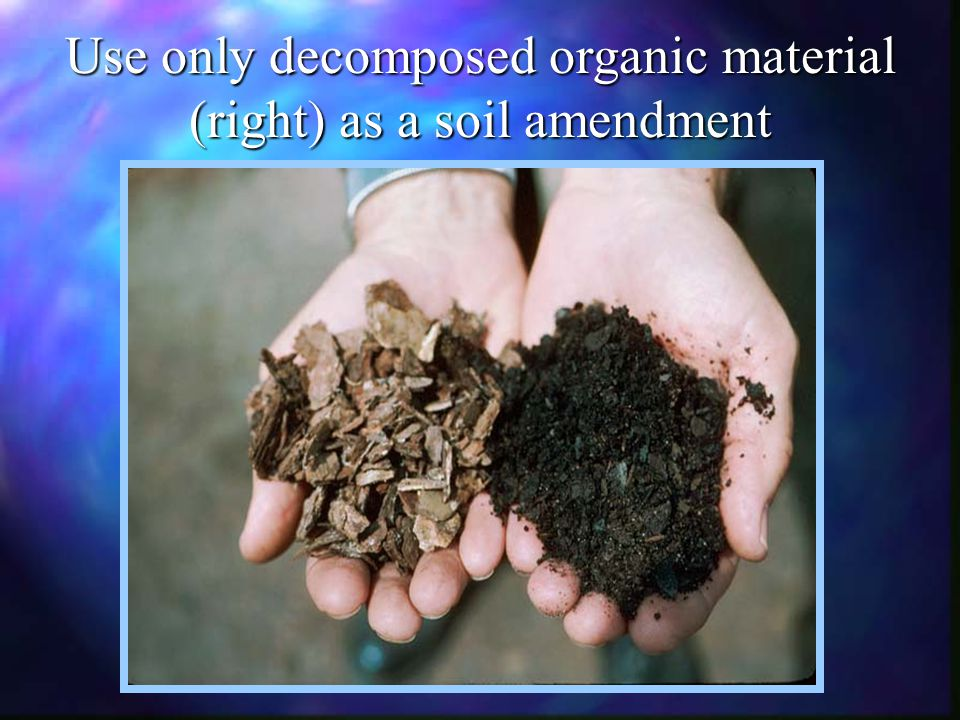 Use only decomposed organic material (right) as a soil amendment