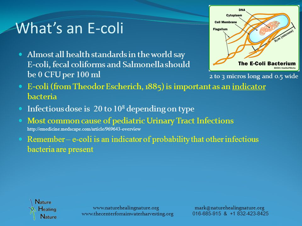 Whats an E-coli Almost all health standards in the world say E-coli, fecal coliforms and Salmonella should be 0 CFU per 100 ml E-coli (from Theodor Escherich, 1885) is important as an indicator bacteria Infectious dose is 20 to 10 8 depending on type Most common cause of pediatric Urinary Tract Infections http://emedicine.medscape.com/article/969643-overview Remember – e-coli is an indicator of probability that other infectious bacteria are present www.naturehealingnature.org mark@naturehealingnature.org www.thecenterforrainwaterharvesting.org 016-685-915 & +1 832-423-8425 2 to 3 micros long and 0.5 wide