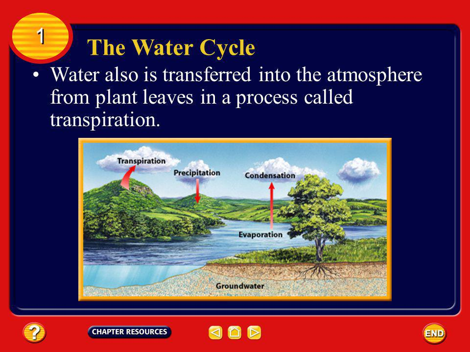 The Water Cycle 1 1 Water also is transferred into the atmosphere from plant leaves in a process called transpiration.