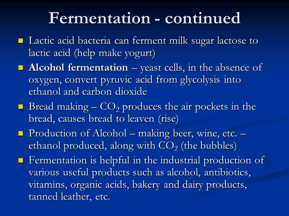 Fermentation - continued Lactic acid bacteria can ferment milk sugar lactose to lactic acid (help make yogurt) Lactic acid bacteria can ferment milk s