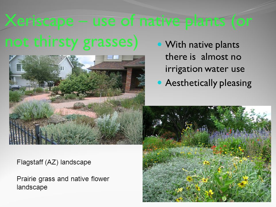 Xeriscape – use of native plants (or not thirsty grasses) With native plants there is almost no irrigation water use Aesthetically pleasing Flagstaff (AZ) landscape Prairie grass and native flower landscape