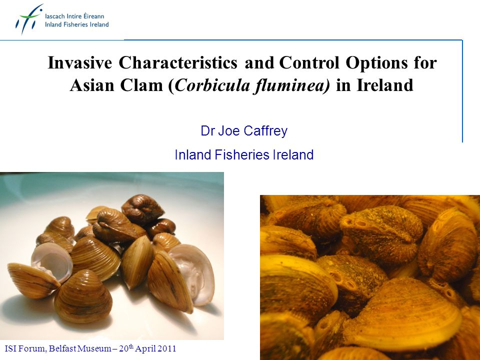 Invasive Characteristics and Control Options for Asian Clam (Corbicula fluminea) in Ireland Dr Joe Caffrey Inland Fisheries Ireland ISI Forum, Belfast