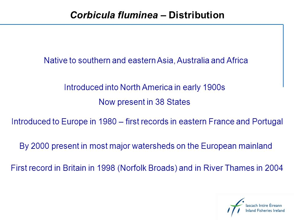 Corbicula fluminea – Distribution Native to southern and eastern Asia, Australia and Africa Introduced into North America in early 1900s Now present i