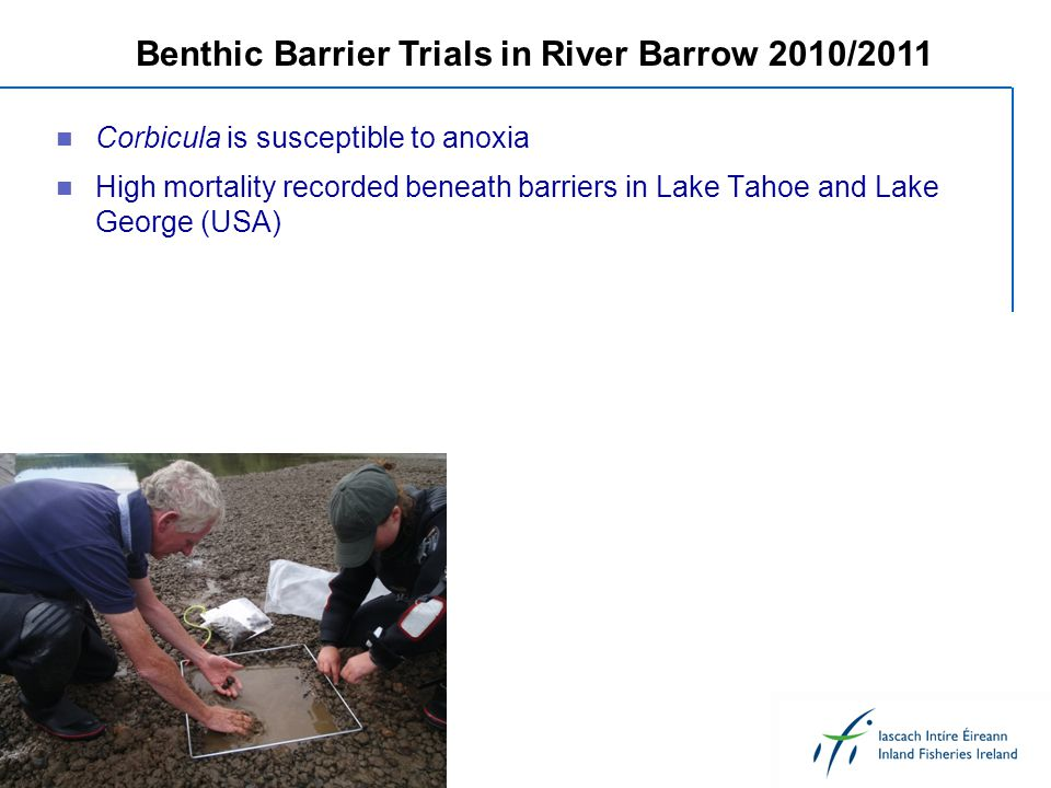 Corbicula is susceptible to anoxia High mortality recorded beneath barriers in Lake Tahoe and Lake George (USA) Benthic Barrier Trials in River Barrow 2010/2011