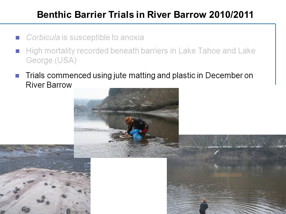 Corbicula is susceptible to anoxia High mortality recorded beneath barriers in Lake Tahoe and Lake George (USA) Benthic Barrier Trials in River Barrow 2010/2011 Trials commenced using jute matting and plastic in December on River Barrow