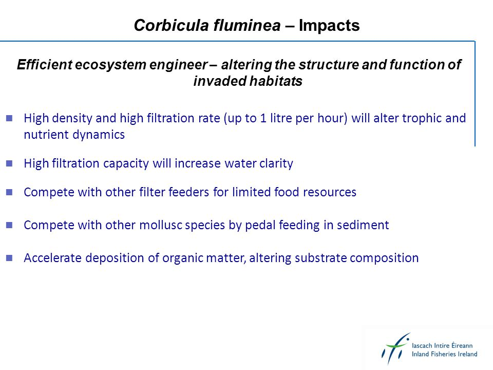 Corbicula fluminea – Impacts High density and high filtration rate (up to 1 litre per hour) will alter trophic and nutrient dynamics Compete with other filter feeders for limited food resources Compete with other mollusc species by pedal feeding in sediment Accelerate deposition of organic matter, altering substrate composition Efficient ecosystem engineer – altering the structure and function of invaded habitats High filtration capacity will increase water clarity