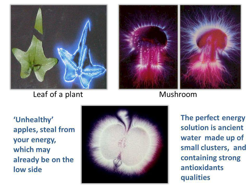 The perfect energy solution is ancient water made up of small clusters, and containing strong antioxidants qualities Unhealthy apples, steal from your energy, which may already be on the low side Leaf of a plantMushroom