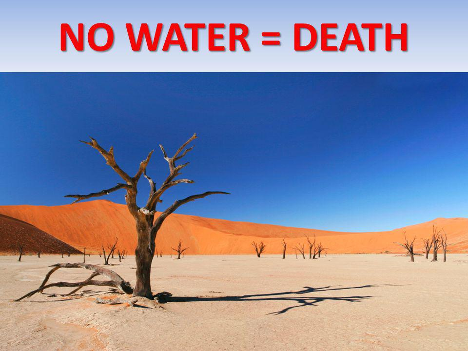 NO WATER = DEATH