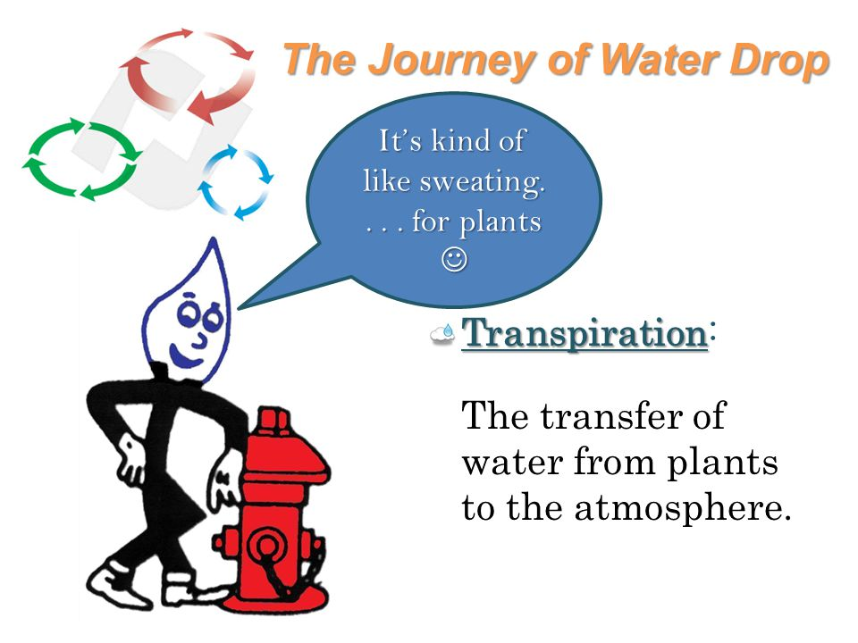 The Journey of Water Drop Transpiration Transpiration: The transfer of water from plants to the atmosphere.