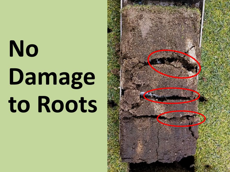 No Damage to Roots