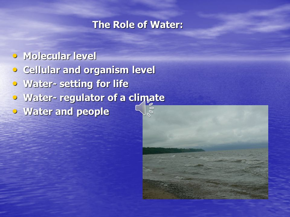 The Role of Water: Molecular level Molecular level Cellular and organism level Cellular and organism level Water- setting for life Water- setting for