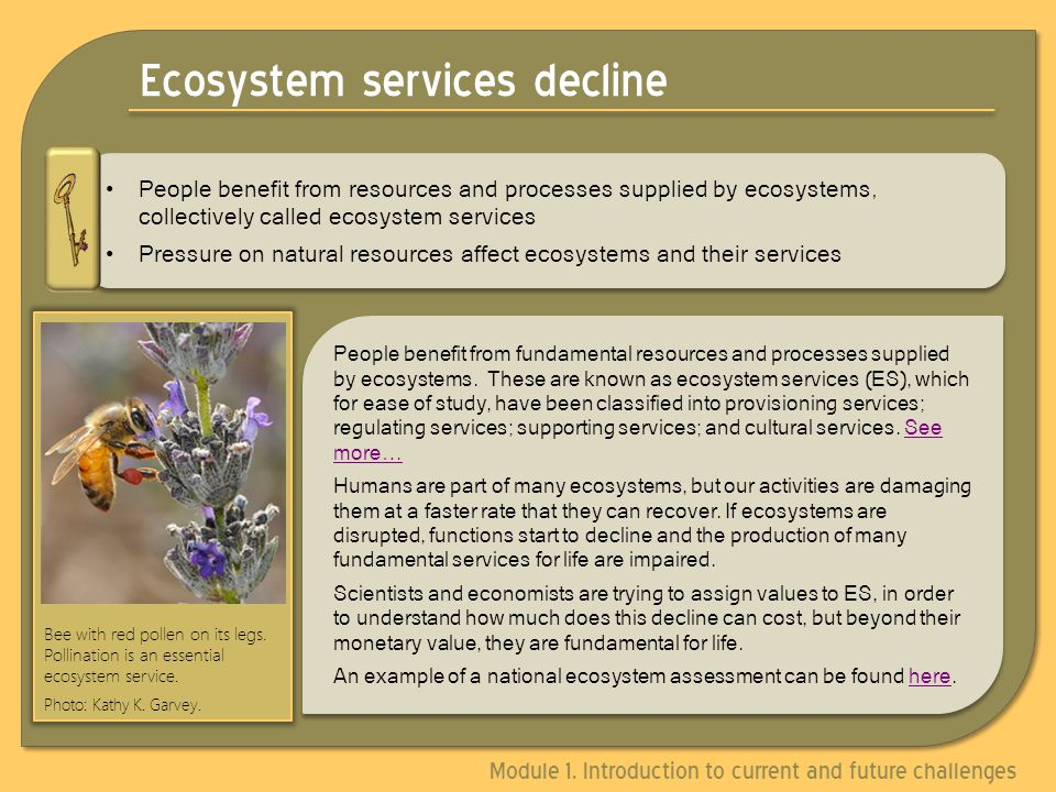 Ecosystem services decline People benefit from resources and processes supplied by ecosystems, collectively called ecosystem services Pressure on natural resources affect ecosystems and their services People benefit from resources and processes supplied by ecosystems, collectively called ecosystem services Pressure on natural resources affect ecosystems and their services People benefit from fundamental resources and processes supplied by ecosystems.