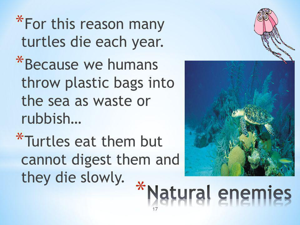 * For this reason many turtles die each year. * Because we humans throw plastic bags into the sea as waste or rubbish… * Turtles eat them but cannot d