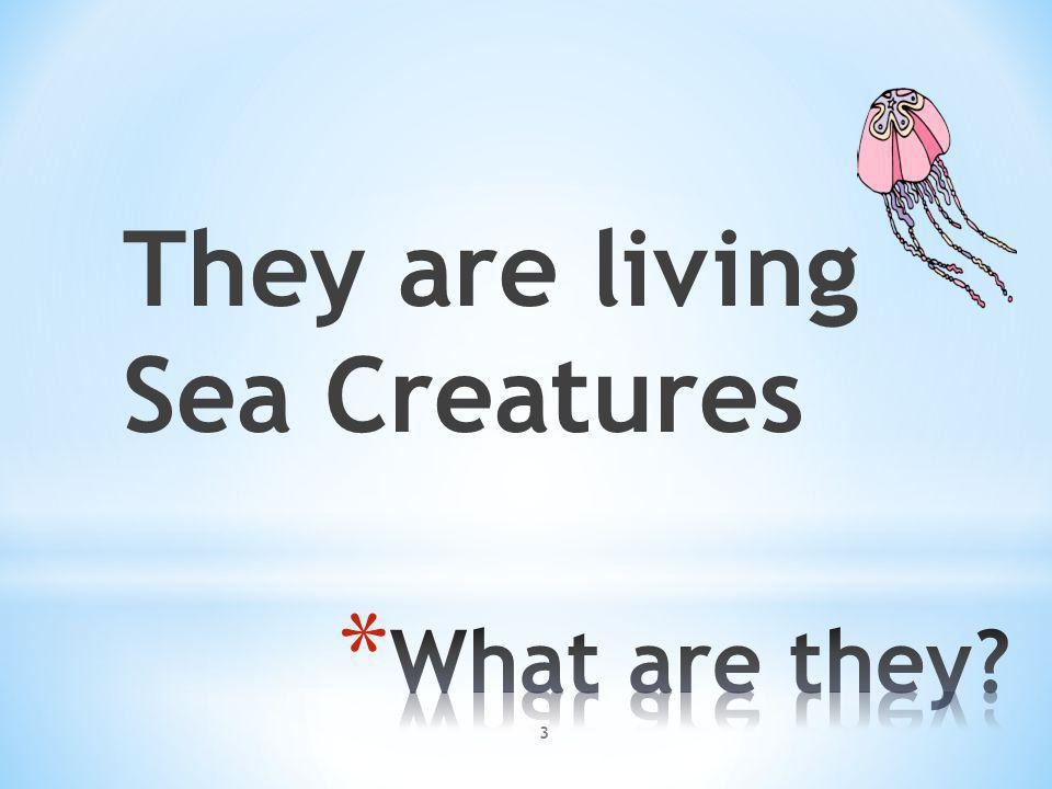 They are living Sea Creatures 3