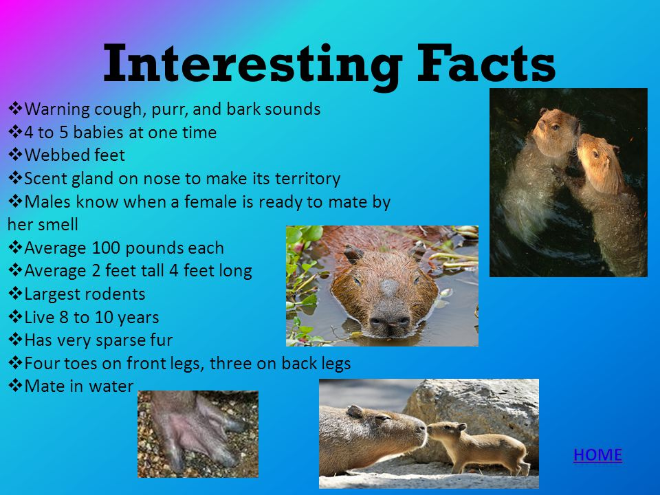 Interesting Facts Warning cough, purr, and bark sounds 4 to 5 babies at one time Webbed feet Scent gland on nose to make its territory Males know when