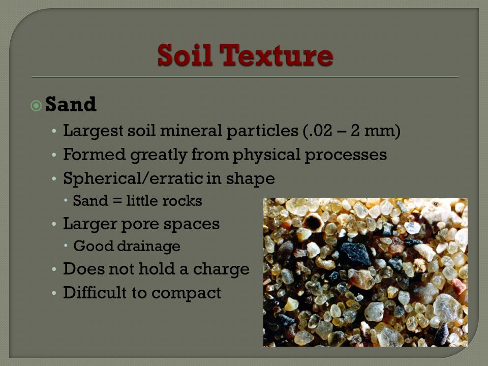 Sand Largest soil mineral particles (.02 – 2 mm) Formed greatly from physical processes Spherical/erratic in shape Sand = little rocks Larger pore spaces Good drainage Does not hold a charge Difficult to compact