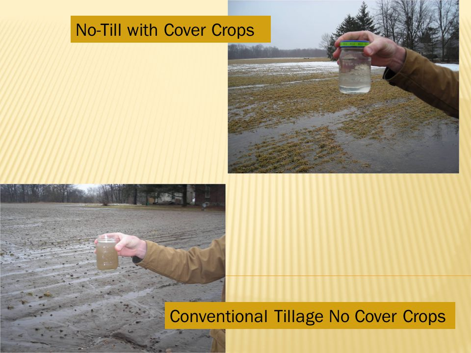 No-Till with Cover Crops Conventional Tillage No Cover Crops