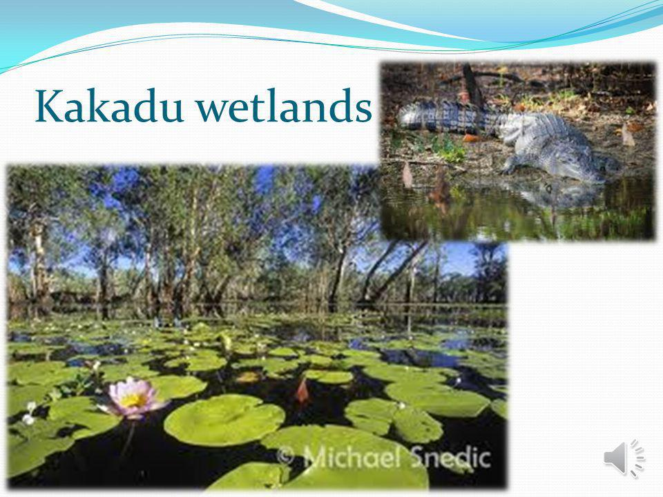World heritage Kakadu National Park 2.5 hours east of Darwin