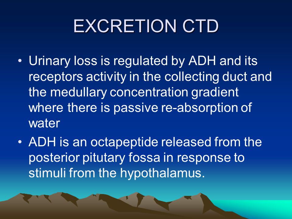 EXCRETION CTD Urinary loss is regulated by ADH and its receptors activity in the collecting duct and the medullary concentration gradient where there