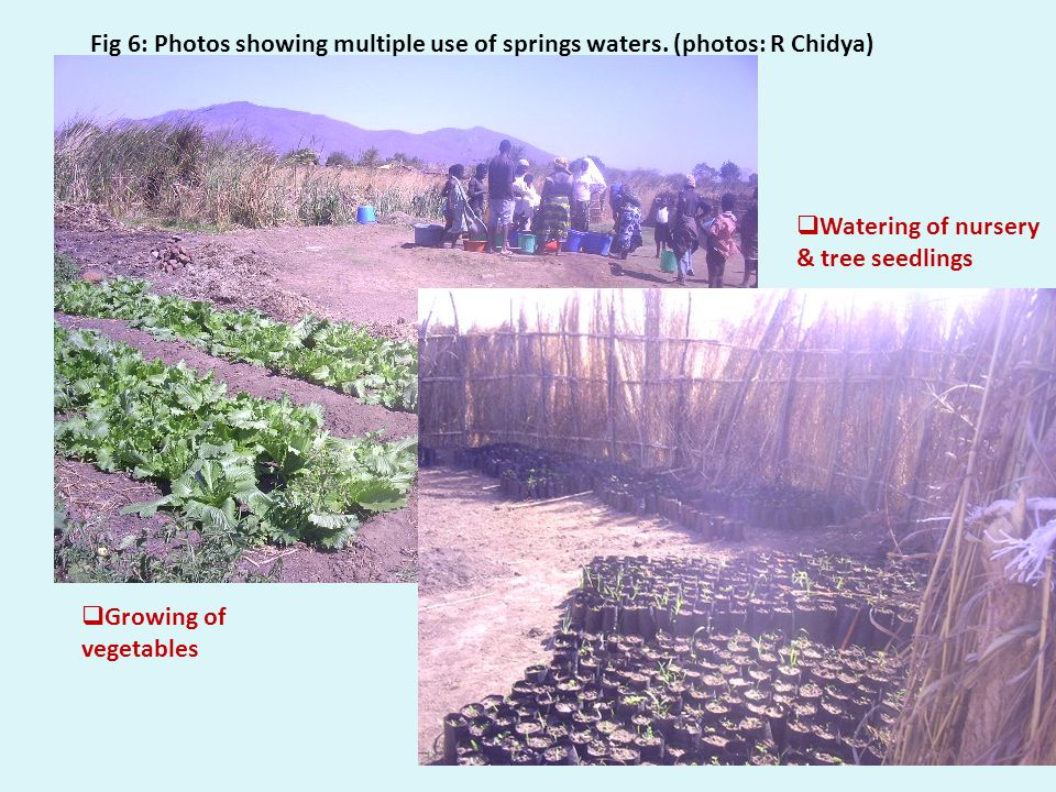 NEPAD SANWATCE13 Watering of nursery & tree seedlings Growing of vegetables Fig 6: Photos showing multiple use of springs waters.