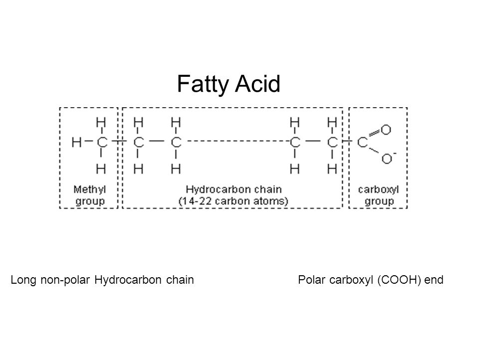 Fatty Acid Long non-polar Hydrocarbon chainPolar carboxyl (COOH) end