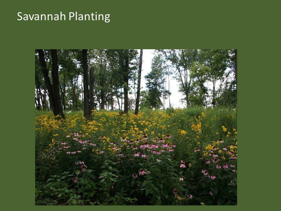 Savannah Planting