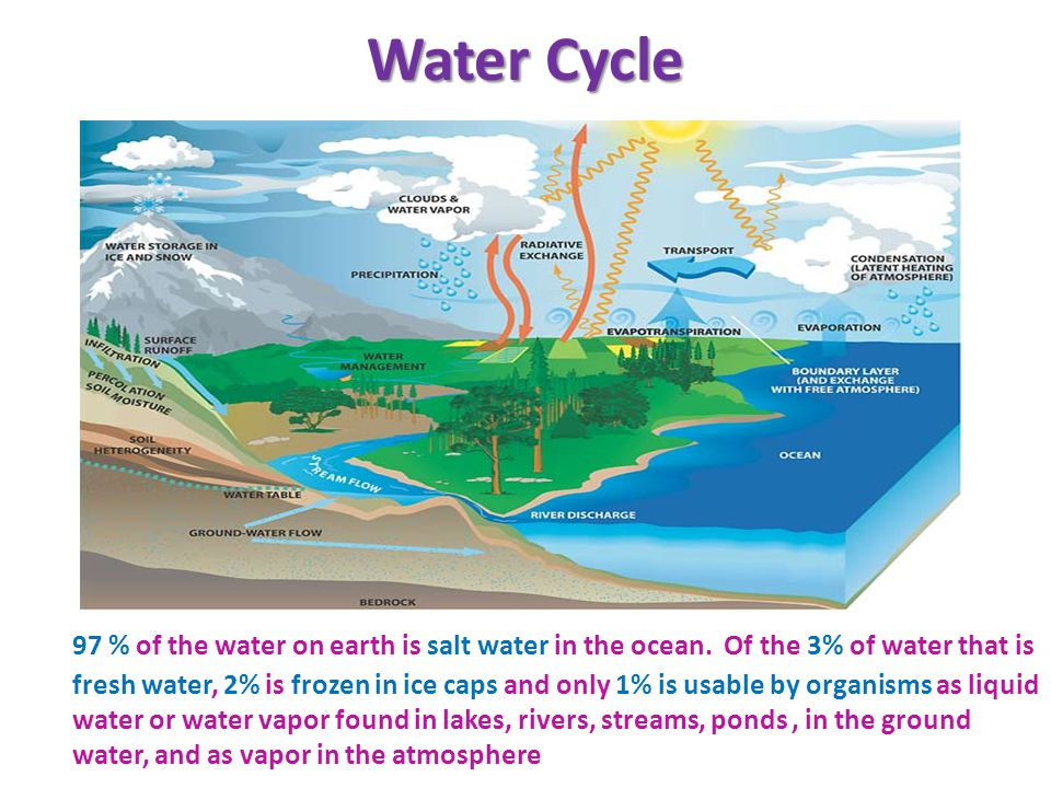 Water Cycle 97 % of the water on earth is salt water in the ocean.