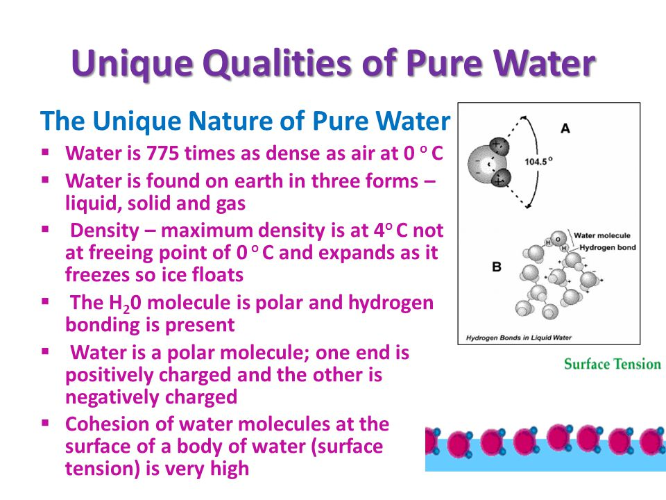 Unique Qualities of Pure Water The Unique Nature of Pure Water Water is 775 times as dense as air at 0 o C Water is found on earth in three forms – liquid, solid and gas Density – maximum density is at 4 o C not at freeing point of 0 o C and expands as it freezes so ice floats The H 2 0 molecule is polar and hydrogen bonding is present Water is a polar molecule; one end is positively charged and the other is negatively charged Cohesion of water molecules at the surface of a body of water (surface tension) is very high