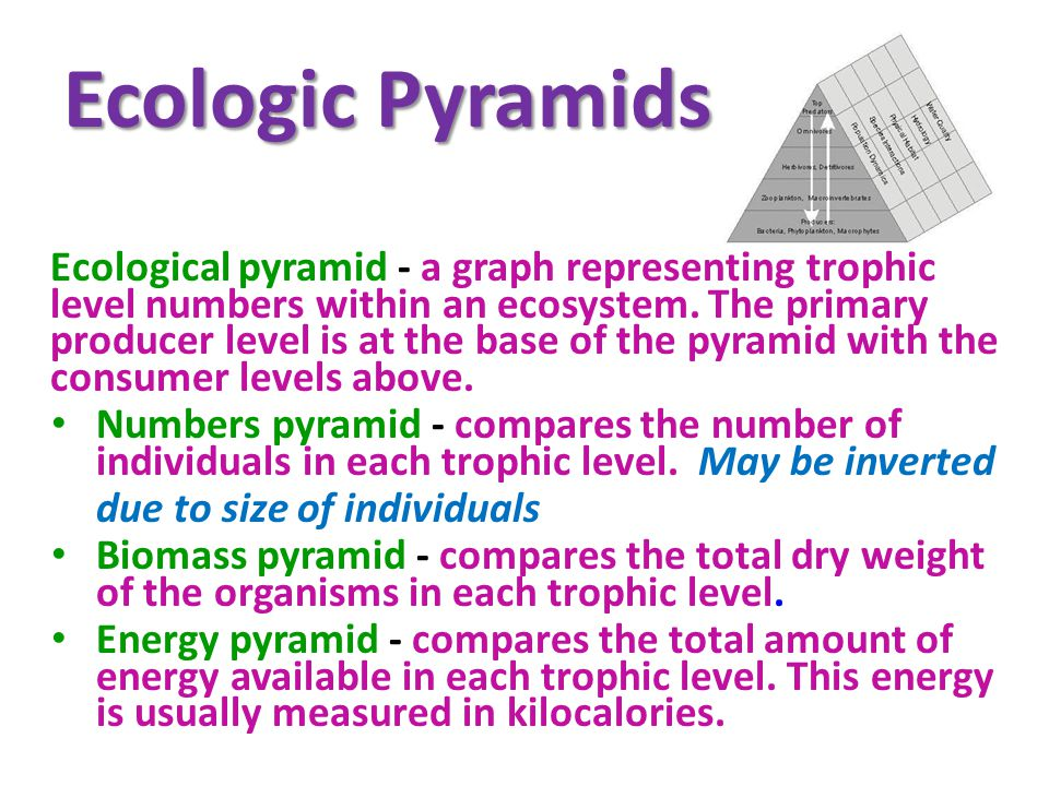 Ecologic Pyramids Ecological pyramid - a graph representing trophic level numbers within an ecosystem.