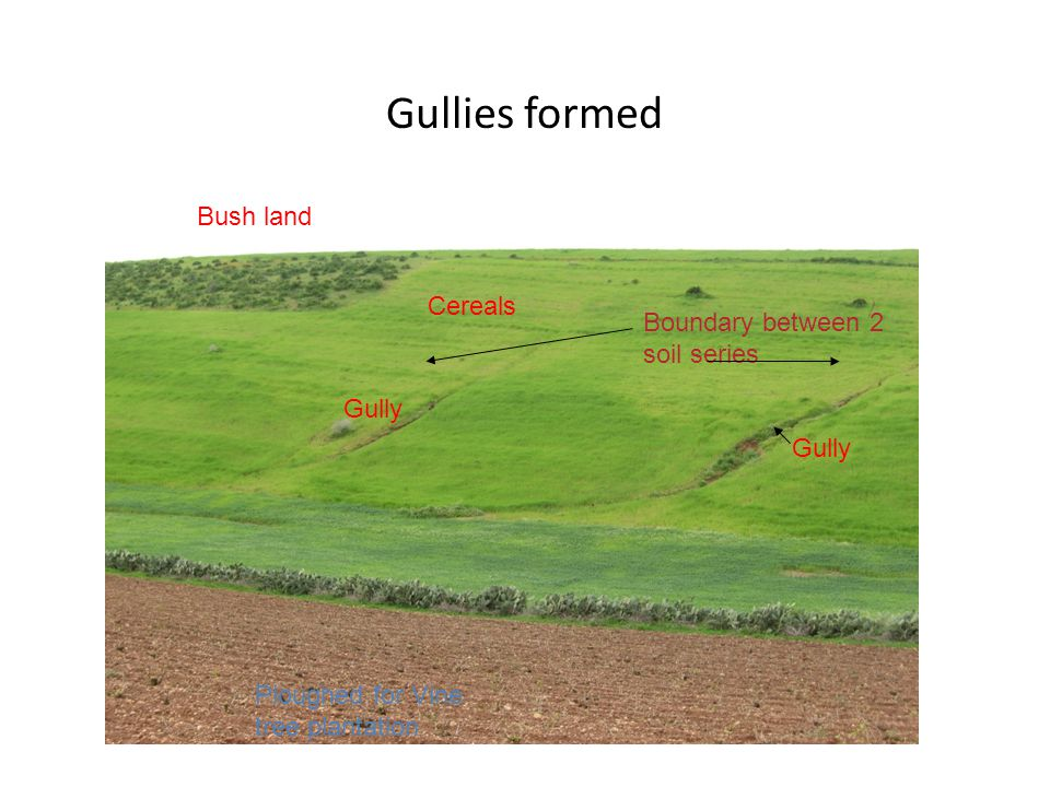 Gullies formed Bush land Cereals Ploughed for Vine tree plantation Gully Boundary between 2 soil series