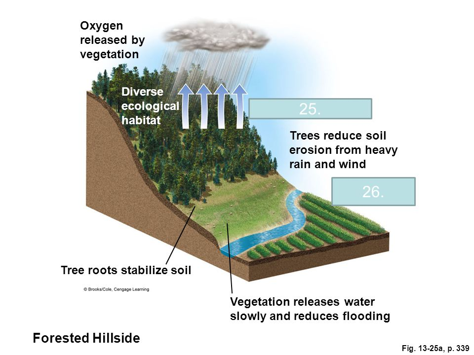 Fig. 13-25a, p. 339 Oxygen released by vegetation Diverse ecological habitat Evapotranspiration Trees reduce soil erosion from heavy rain and wind Agr