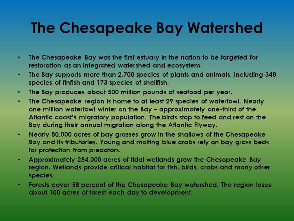 The Chesapeake Bay Watershed The Chesapeake Bay was the first estuary in the nation to be targeted for restoration as an integrated watershed and ecosystem.