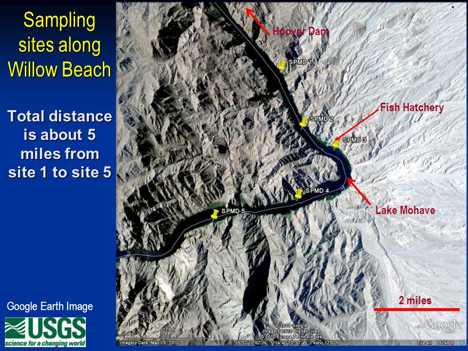 Sampling sites along Willow Beach Total distance is about 5 miles from site 1 to site 5 Google Earth Image 2 miles Fish Hatchery Hoover Dam Lake Mohave
