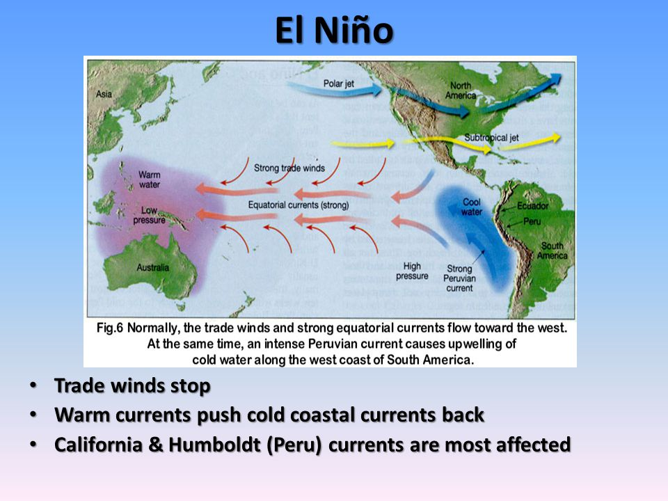 El Niño Trade winds stop Trade winds stop Warm currents push cold coastal currents back Warm currents push cold coastal currents back California & Humboldt (Peru) currents are most affected California & Humboldt (Peru) currents are most affected