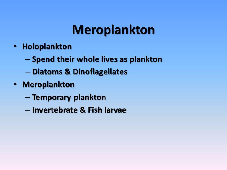 Meroplankton Holoplankton Holoplankton – Spend their whole lives as plankton – Diatoms & Dinoflagellates Meroplankton Meroplankton – Temporary plankton – Invertebrate & Fish larvae