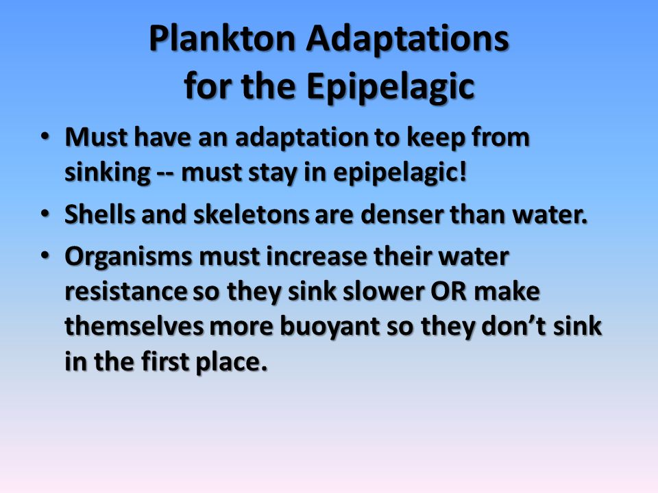 Plankton Adaptations for the Epipelagic Must have an adaptation to keep from sinking -- must stay in epipelagic! Must have an adaptation to keep from
