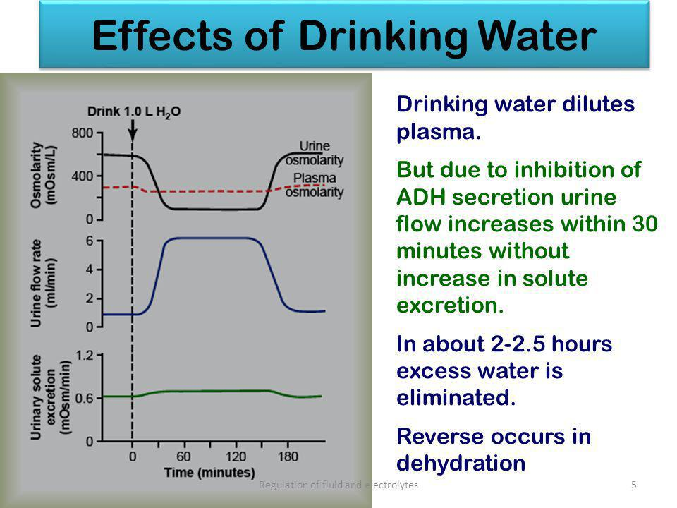 Effects of Drinking Water June 20135 Drinking water dilutes plasma.