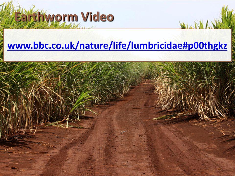 Earthworm Video www.bbc.co.uk/nature/life/lumbricidae#p00thgkz