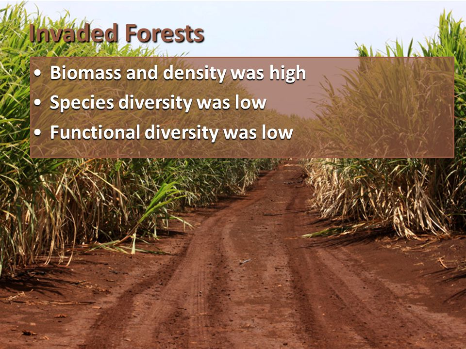Invaded Forests Biomass and density was highBiomass and density was high Species diversity was lowSpecies diversity was low Functional diversity was lowFunctional diversity was low