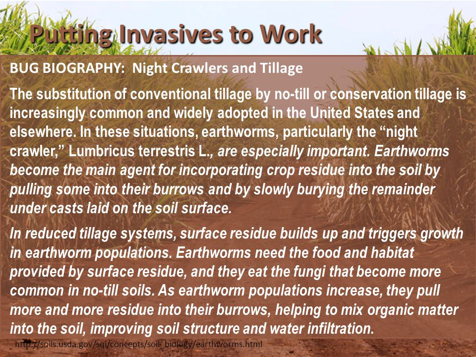 Putting Invasives to Work BUG BIOGRAPHY: Night Crawlers and Tillage The substitution of conventional tillage by no-till or conservation tillage is increasingly common and widely adopted in the United States and elsewhere.